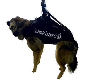 Flugsau Gleitschirm Hundegurtzeuge